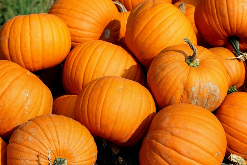 upload/newsy/2502/pumpkins-457716-1920-big_medium.jpg