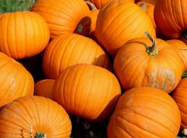 upload/newsy/2502/pumpkins-457716-1920-big_nmedium.jpg
