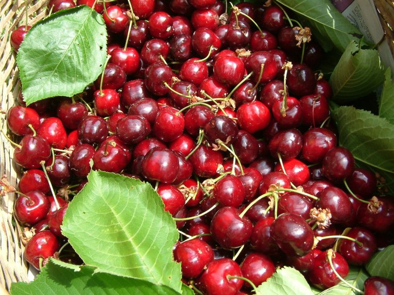 upload/newsy/2785/beautiful-cherries-1323190-1280x960_medium.jpg