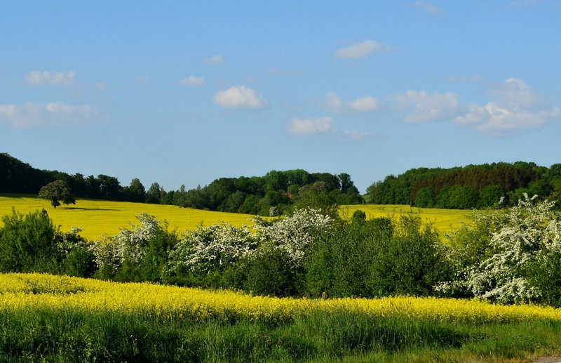 upload/newsy/3061/field-of-rapeseeds-3387609-1280_medium.jpg