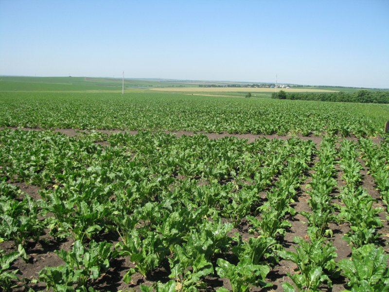 upload/newsy/3153/sugar-beet-field-1317913-1280x960_medium.jpg