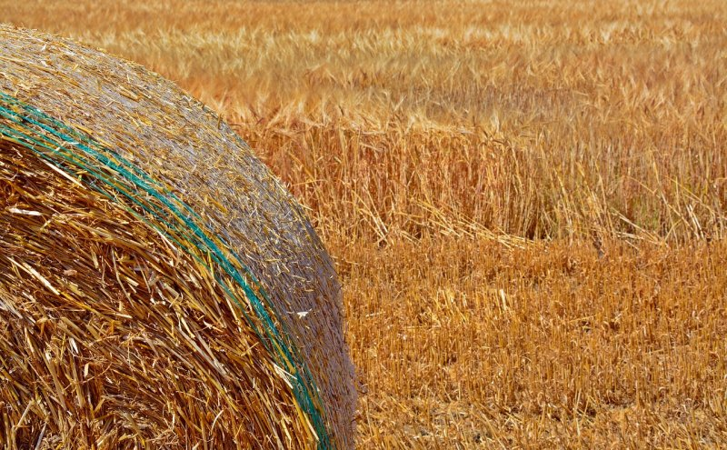 upload/newsy/3216/straw-bales-3514084-1280_medium.jpg