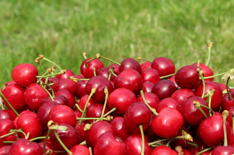 upload/newsy/3827/cherries-4247202-1280_medium.jpg