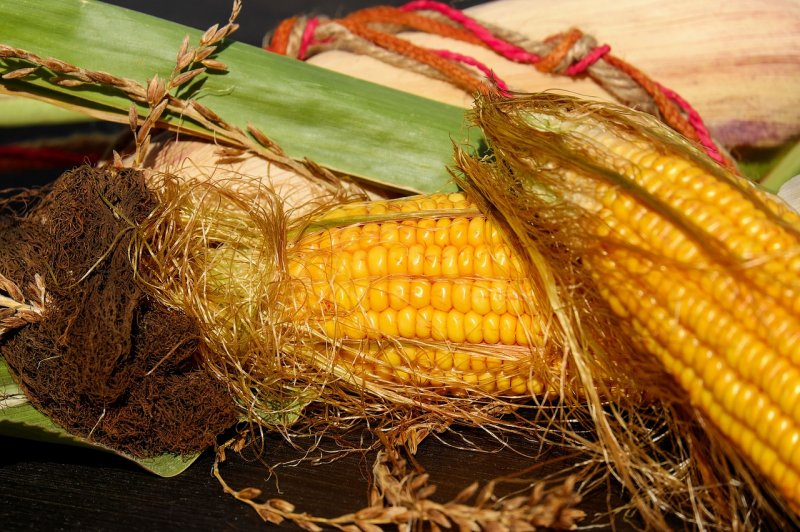 upload/newsy/3867/corn-on-the-cob-1715715-1280_medium.jpg