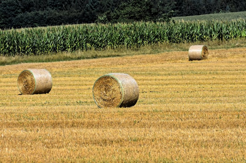 upload/newsy/3953/hay-bales-4402007-1280_1_medium.jpg