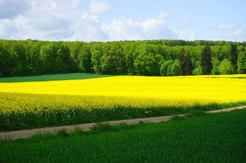 upload/newsy/4049/field-of-rapeseeds-474507-1280_medium.jpg