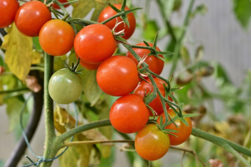 upload/newsy/4050/tomatoes-4434850-1280_medium.jpg