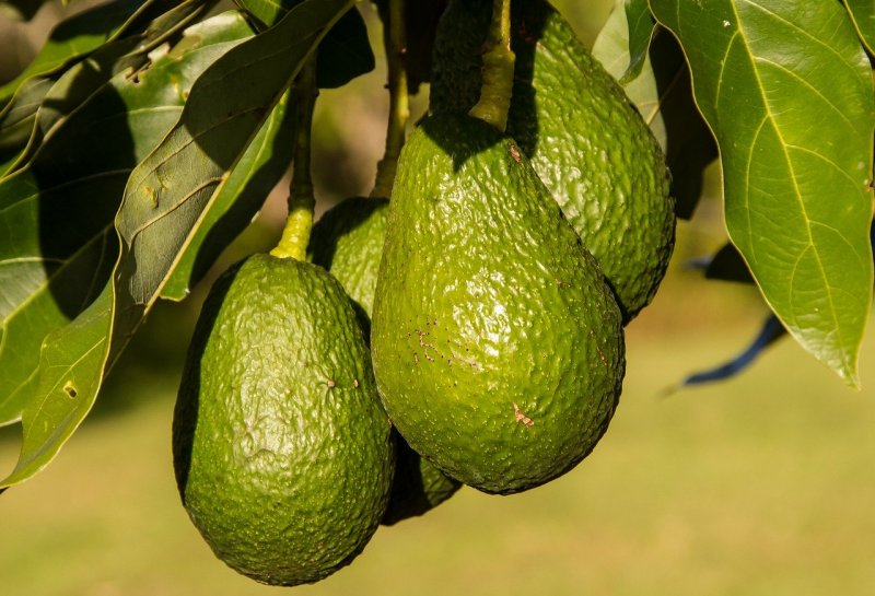 upload/newsy/4113/hass-avocado-945418-1280_medium.jpg