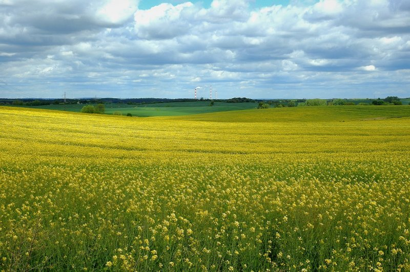 upload/newsy/4649/canola-field-5190826-1280_medium.jpg