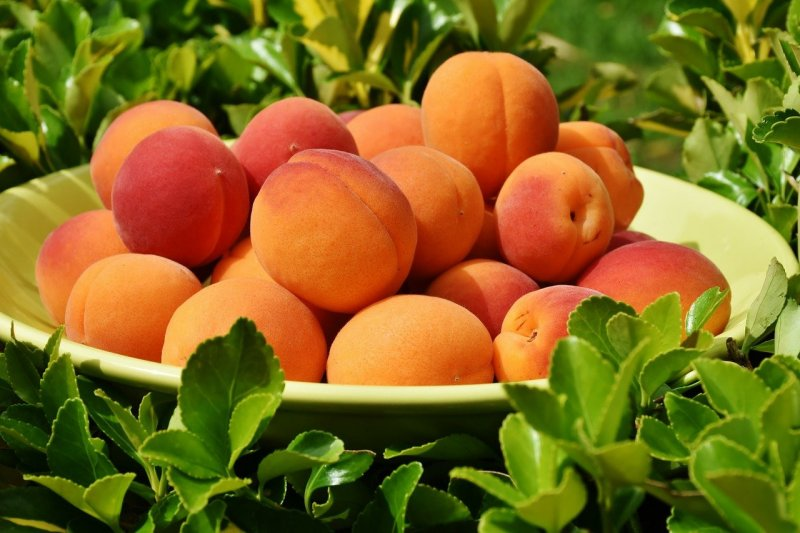 upload/newsy/4733/apricots-1522680-1280_medium.jpg