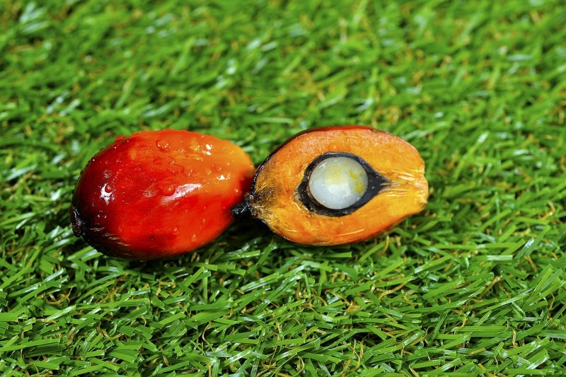 upload/newsy/4917/close-up-of-fresh-palm-oil-fruits-3306098-1280_medium.jpg
