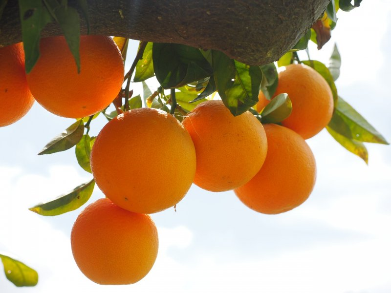 upload/newsy/5019/oranges-1117498-1280_medium.jpg