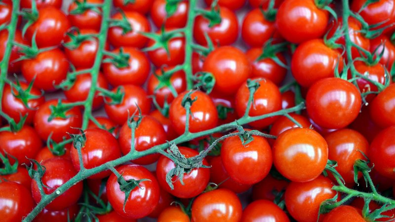 upload/newsy/5084/tomatoes-5962215-1280_medium.jpg